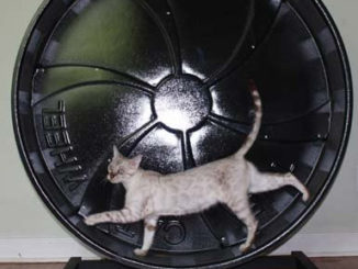 roue hamster pour chat